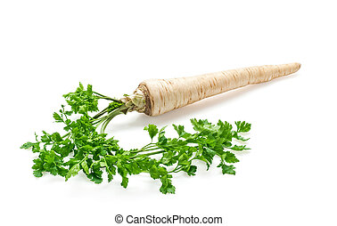 Fresh parsley with root leaf on white background