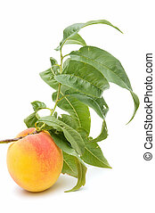 freshly harvested peaches isolated on white background
