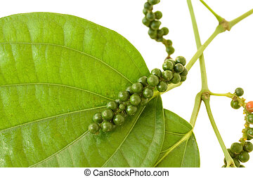 Fresh Peppercorns on a branch with leaves isolated on white