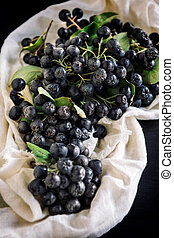 Fresh picked aronia - Served fresh picked aronia,selective...