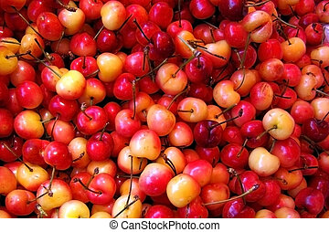 Fresh picked cherries - Fresh picked cherries...