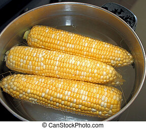 Fresh cobs of sweet corn - in pot ready for cooking