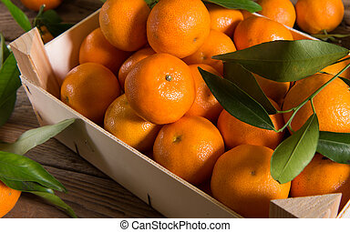 Fresh picked mandarins