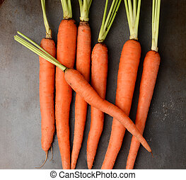 Fresh Picked Organic Carrots - Fresh picked organic carrots...