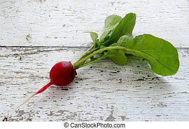 Fresh Picked Radish - Single fresh picked red radish on...