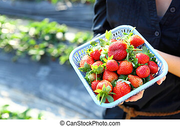 Fresh picked strawberry