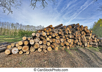 Fresh piled tree - The cut and chopped fire wood are stacked...