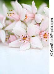 Fresh, pink flowers background