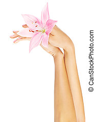 Fresh pink lily in female hands