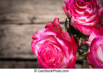 Fresh pink roses on white