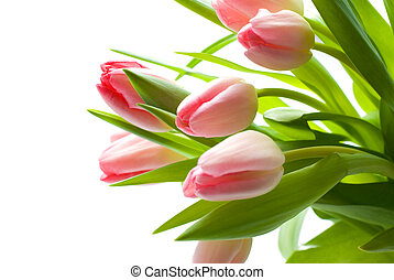 bouquet of fresh, pink tulips