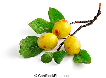 fresh plum fruits with green leaves