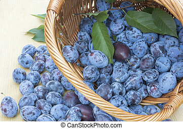 Fresh plums in a wooden basket
