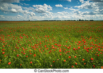 Rural landscape with poppy field under cloudy skies