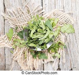 Cilantro - Fresh portion Cilantro as detailed close-up shot