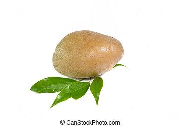 Fresh potato isolated on white