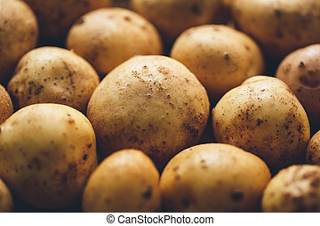 Fresh potato tubers closeup. Low-key lighting