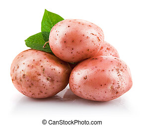 fresh potatoes with green leaf