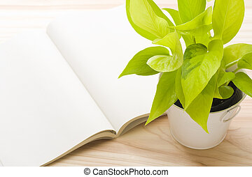 fresh pothos and open book
