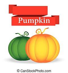 fresh pumpkin on white background vector