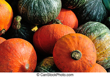fresh pumpkin selling at vegetable market
