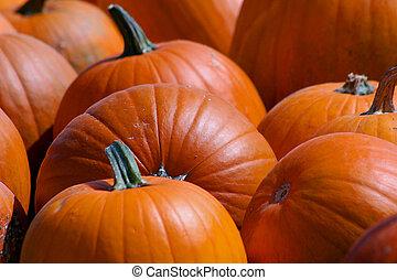 Fresh Pumpkins - Group of pumpkins close up