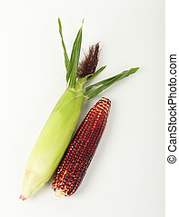 fresh purple corn isolated on white - Top view of fresh...