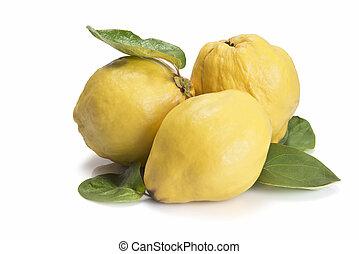 Fresh quinces isolated over white background - Premium fresh...