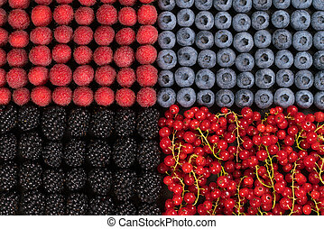 Fresh raspberries, blackberries, redcurrant and blueberries arranged in one layer separately by type of berries