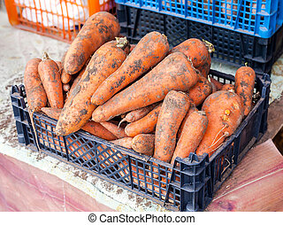 Fresh raw carrot ready to sale at the farmers market
