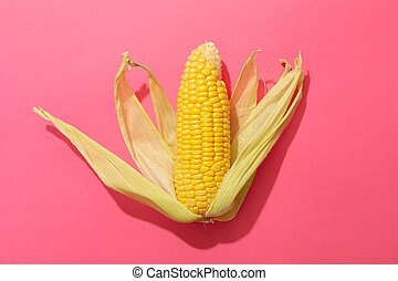 Fresh raw corn on pink background, top view