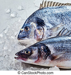 Fresh raw gilt-head bream and loup de mer - Fresh raw...