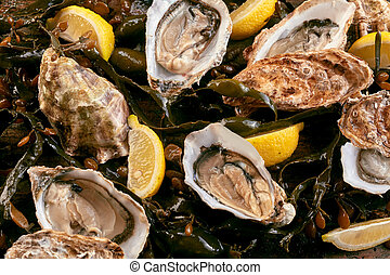 Fresh raw opened oysters on a bed of kelp