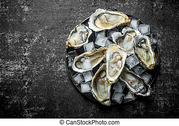 Fresh raw oysters with ice cubes on a plate.