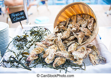 fresh raw oysters with ice