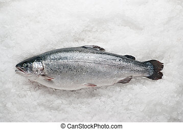 salmonid trout on ice - Fresh raw salmonid trout on ice