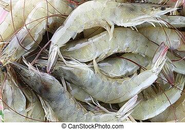 fresh raw shrimp as garnish in cooking. - fresh raw shrimp...