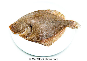 Fresh raw turbot fish on white plate and white background