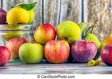 Fresh, real apples from organic farming, ecological harvest ...