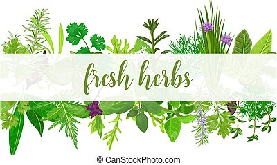 Fresh Realistic herbs and flowers with text. Horizontal. plants above and below.