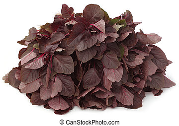 Fresh red amaranth - Bunch of some bunched red amaranth...