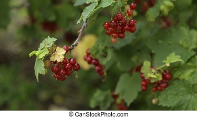 Fresh red berries - A bunch of sweet red berries