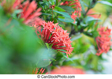 fresh red flowers with green leaves in the garden