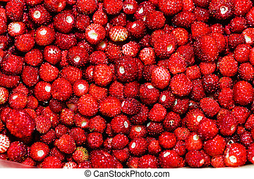 Fresh red forest strawberry
