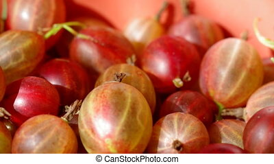 Fresh red  gooseberry, berry background
