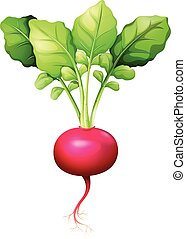 Fresh red radish with leaves