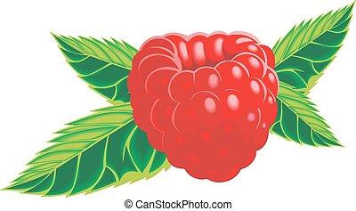 raspberry isolated