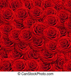 fresh red roses backgroud with water drops