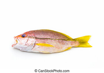 Fresh Red Snapper Fish. - Fresh Red Snapper Fish On White...