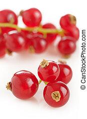 fresh redcurrant isolated on white